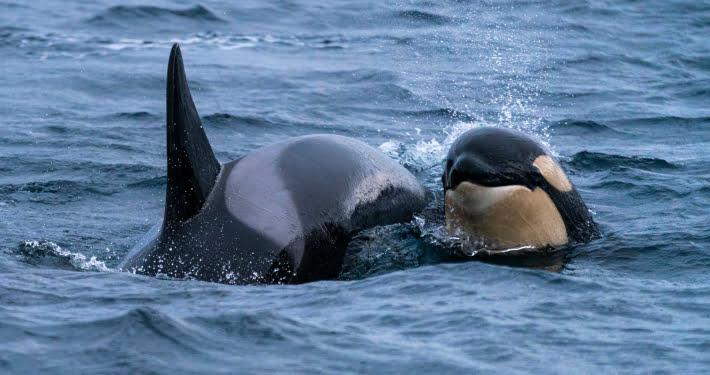 Tour Norwegen Orca